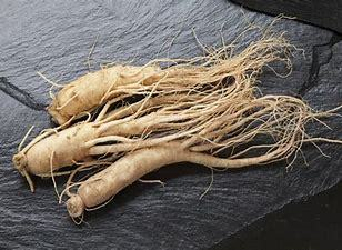 GRAINES GINSENG MALASIA, 10 graines